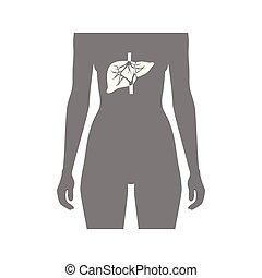 Vector illustration of liver