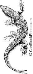 Lizard sketch - Vector illustration of Lizard sketch