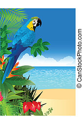 Macaw bird with tropical beach back