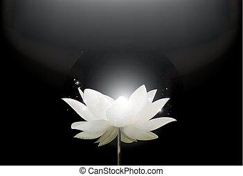 Magic White Lotus flower
