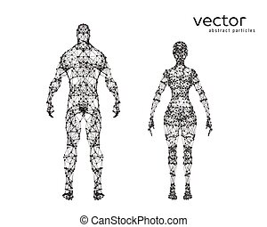 Vector illustration of male and female body