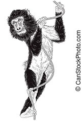 monkey with a rope on white background