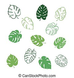 Vector illustration of monstera leaves