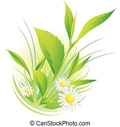 natural plants and chamomile - Vector illustration of ...
