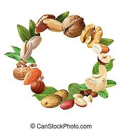 Vector illustration of nuts