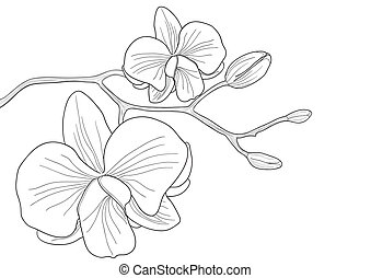 Vector illustration of orchid flower on white background