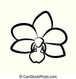 Vector illustration of orchid flower. Vector illustration ...