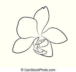 Vector illustration of orchid flower