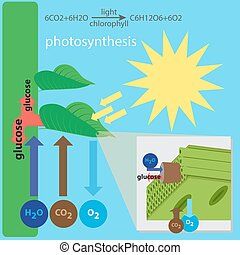 photosynthesis process - vector illustration of...