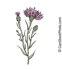 pink cornflower twig