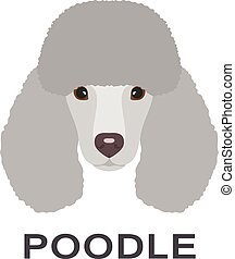 Vector illustration of poodle in flat style. Poodle flat icon.
