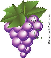 Vector illustration of purple grapes