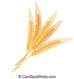 vector illustration of realistic isolated bundle of wheat ears