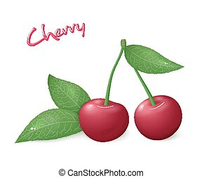 vector illustration of realistic isolated ripe cherry with leaves
