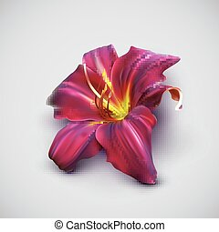 vector illustration of realistic lily flower