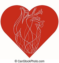 Vector illustration of realistic stylized heart in red...