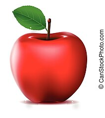 red apple isolated for you design