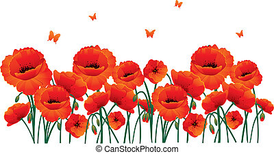 Red poppies back - Vector illustration of Red poppies back