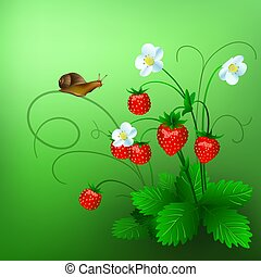 Vector illustration of ripe wild strawberry and a snail