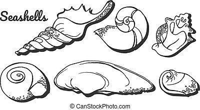 mollusk seashells set