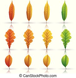 Set of colorful autumn leaves isolated on white background