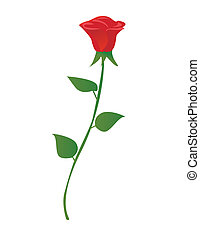 illustration of single red rose