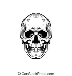 Vector illustration of skull in engraving style. Design concept. Halloween, Day of the Dead background.