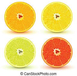 Vector illustration of Slices of citrus fruits: orange, red grapefruit, lemon and lime. Great for making patterns