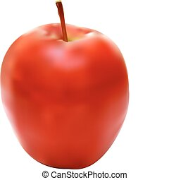 Vector illustration of the apple