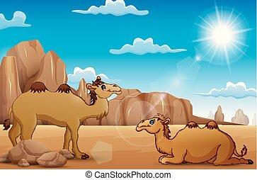 The camel enjoy on desert of summer