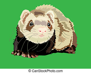 vector illustration of the ferret on the green background