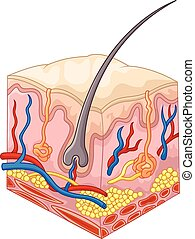 The layers of skin and pores - Vector illustration of The ...