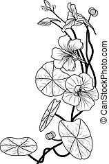 nasturtium - vector illustration of the nasturtium in black ...