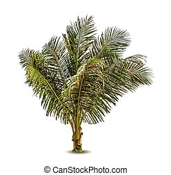 Vector illustration of the palm tree