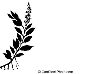 vector illustration of the plant on white background