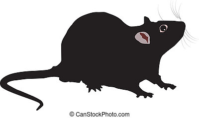 Rat - vector illustration of the Rat on white background