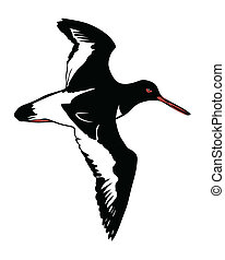vector illustration of the snipe on white background