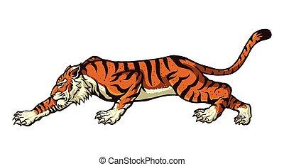 tiger - vector illustration of tiger