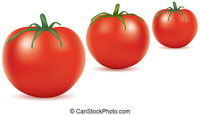 tomatoes - vector illustration of tomatoes