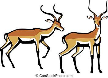 Impala - vector illustration of two Impala antelope, one...