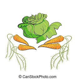 illustration of vegetables cabbage, and carrots