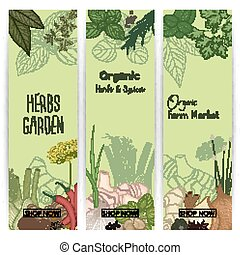 Vertical banner set with spices and herbs