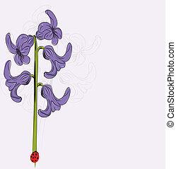 Vector illustration of violet Hyacinth flower