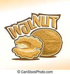 Vector illustration of walnut