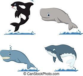 whale cartoon collection