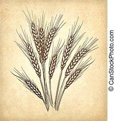 Vector illustration of wheat