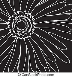 drawing gerbera - Vector illustration of white drawing...