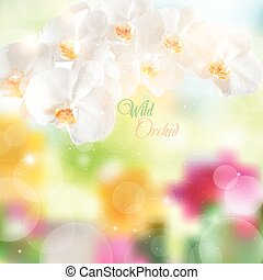 vector illustration of white orchids on a bright floral backgrou