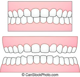 vector illustration of white teeth and gums from a frontal perspective for medical and dental depictions