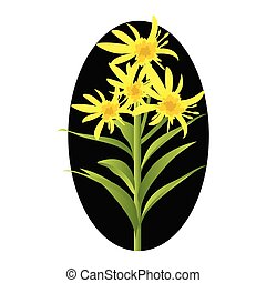 Vector illustration of yellow solidago flowers with green...